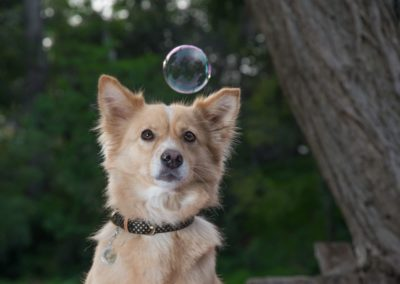 Shorty Staring at Bubble