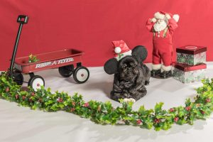 Socks, a shih tzu dog, in photo with holiday props