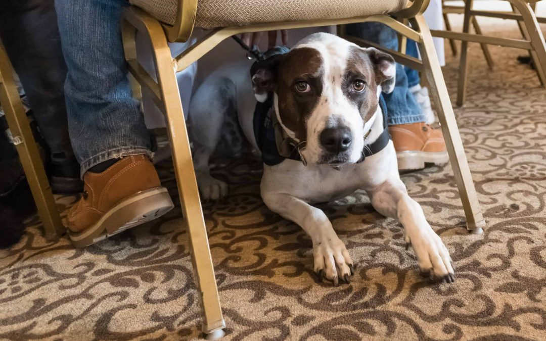 Helping Veterans with Dogs – Operation Freedom Paws