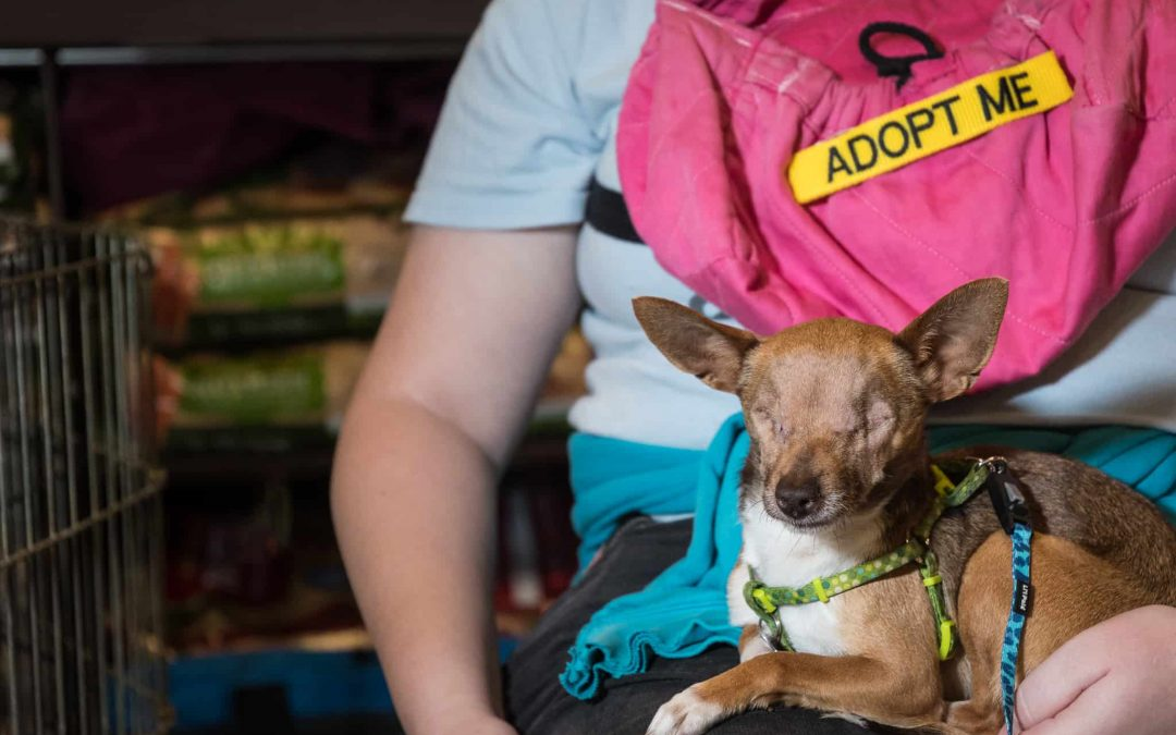 Adorable Ruby Needs a Fur-Ever Home