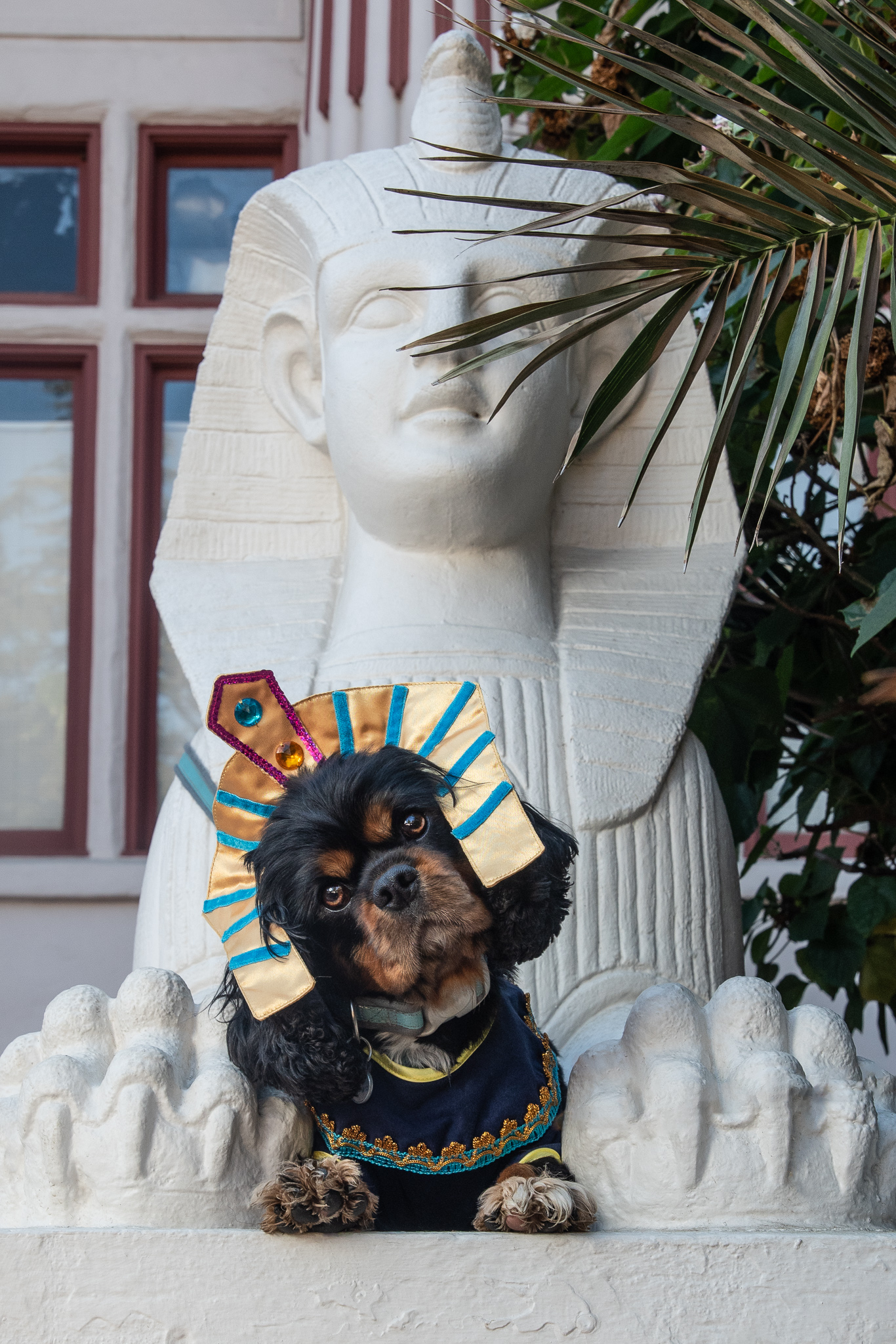 Sphinx in a Sphinx